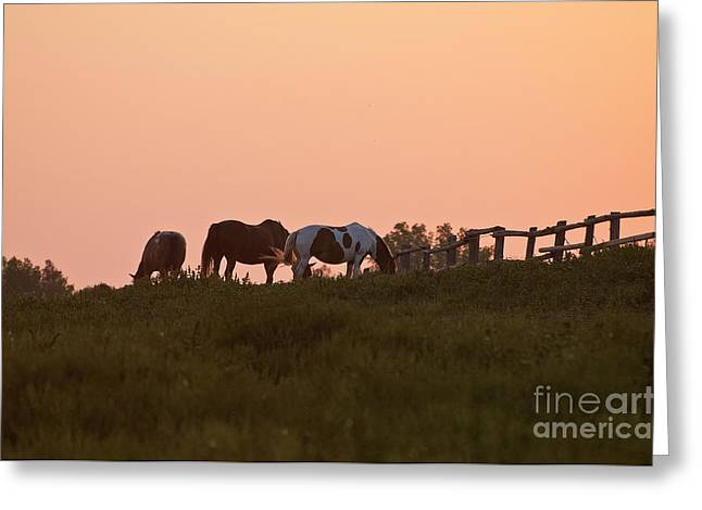 Horse Photography Greeting Cards - Equine Sunrise Greeting Card by Michael Cummings
