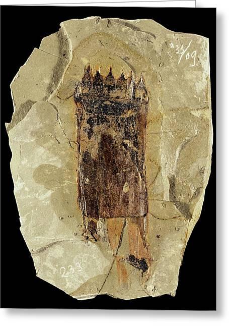 Equisetum Horsetail Fossil Greeting Card by Gilles Mermet