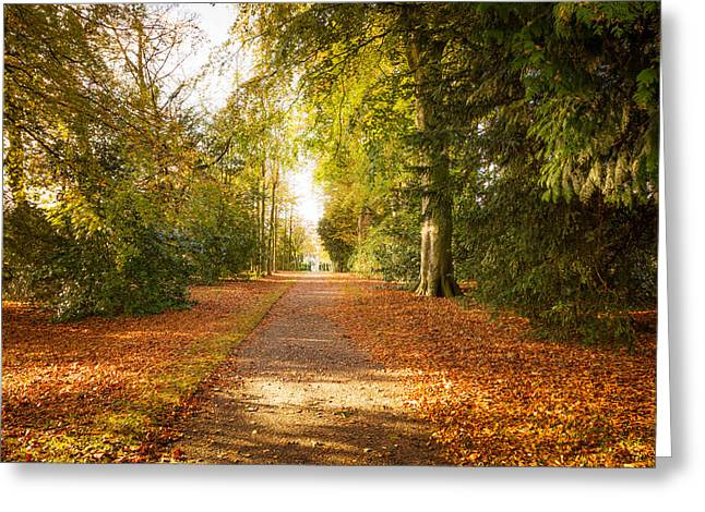Wrexham Greeting Cards - An Autumn Carpet of Golden Leaves Greeting Card by Christine Smart