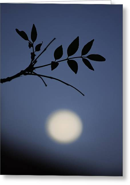 Luna Pyrography Greeting Cards - Eres tu luna? Greeting Card by Guillermo Villa