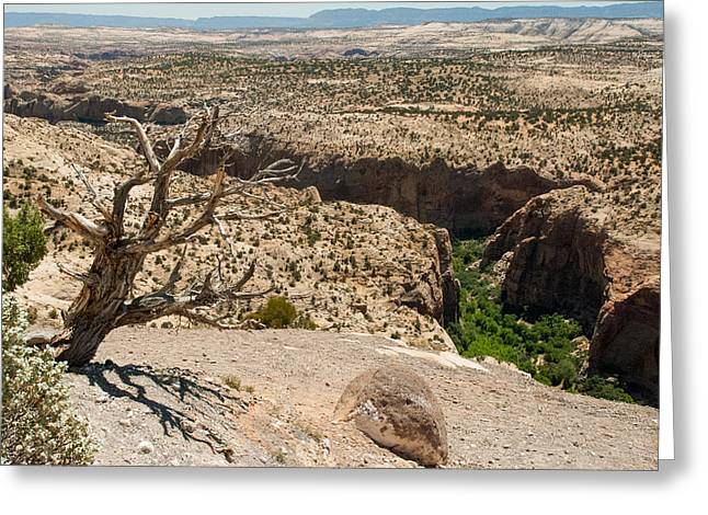 Slickrock Greeting Cards - Escalante Canyons Overlook Utah Greeting Card by Robert Ford