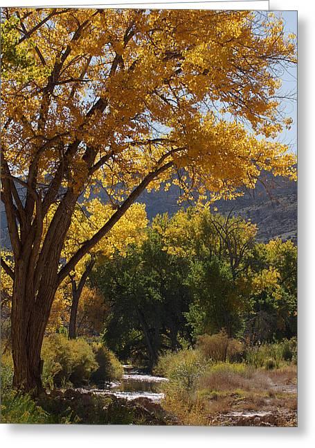 Escalante Greeting Cards - Escalante Creek Greeting Card by Ernie Echols