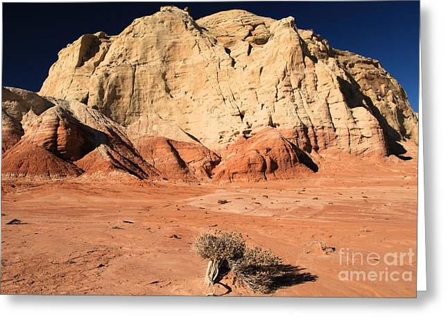 Toad Stools Greeting Cards - Escalante Lone Tree Greeting Card by Adam Jewell