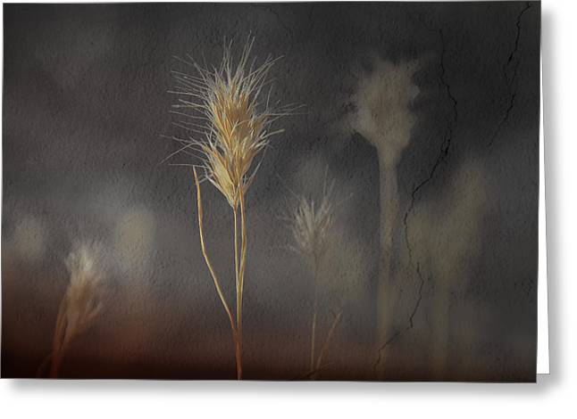 Golden Summer Grass Greeting Cards - Escape Into The Background Greeting Card by Mark  Ross