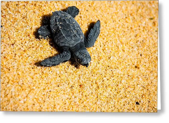 Sea Turtle Greeting Cards - Escape Greeting Card by Sebastian Musial