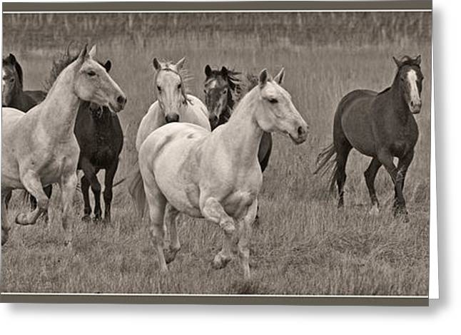 Escapees Photographs Greeting Cards - Escapees From A Lineup D8056 Greeting Card by Wes and Dotty Weber
