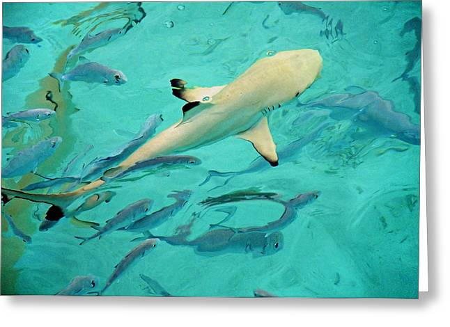 Baby Shark Greeting Cards - Escort  Greeting Card by Jenny Rainbow