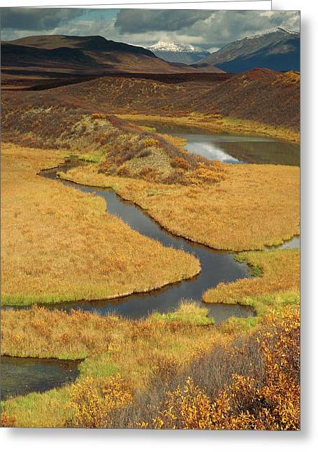 Gerry Greeting Cards - Eskers In Tundra Alaska Greeting Card by Gerry Ellis