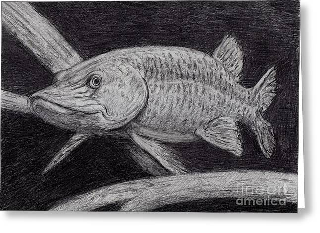 Muskies Greeting Cards - Esox Masquinongy Greeting Card by Larry Green