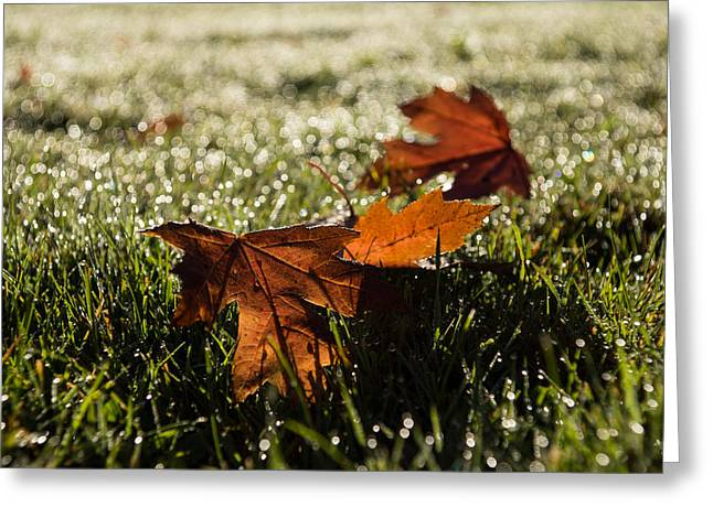 Fall Grass Greeting Cards - Essence of Autumn Greeting Card by Georgia Mizuleva