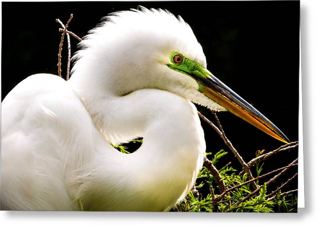 Essence Of Beauty Greeting Card by Karen Wiles