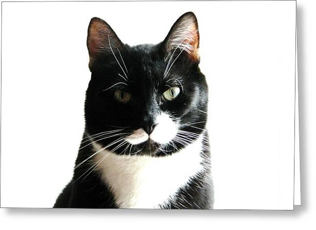 American Shorthair Greeting Cards - Essence of MIschief Greeting Card by Nancy Spirakus