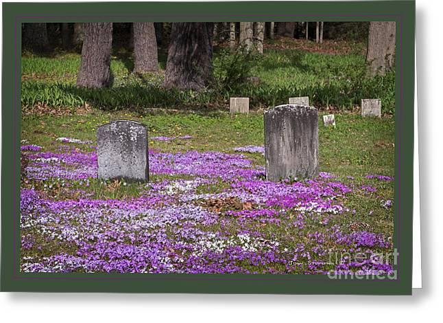 Vinca Flowers Greeting Cards - Eternal Beauty Greeting Card by John Stephens