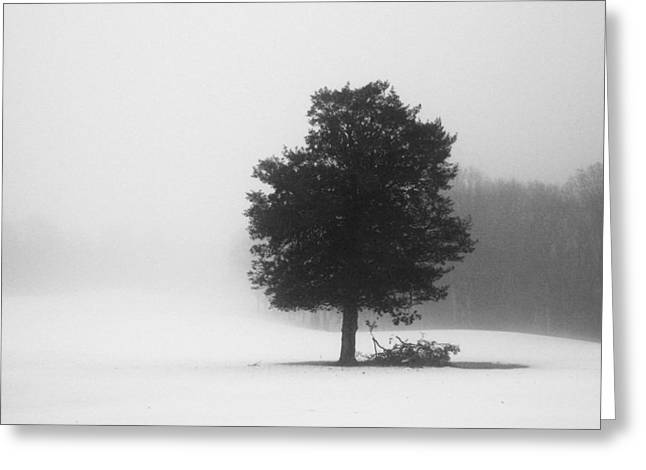 Best Selling Ocean Art Greeting Cards - Eternal Forest Greeting Card by Matthew Grice