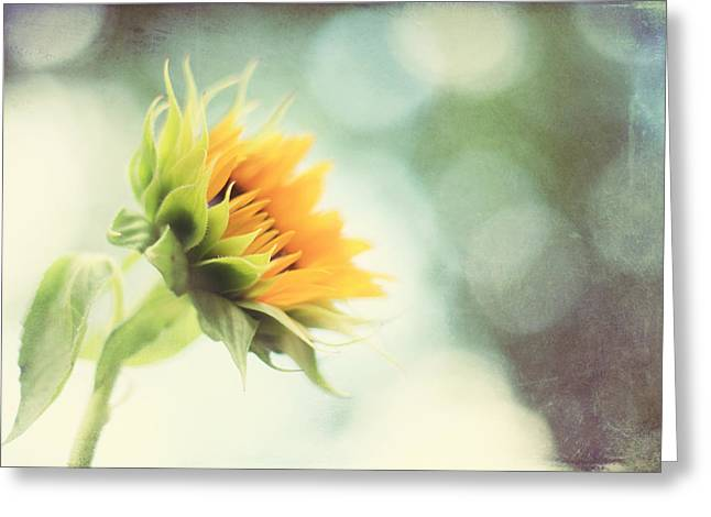 Sunflower Art Greeting Cards - Eternal Optimist Greeting Card by Amy Tyler
