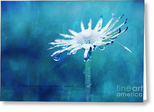 Aimelle Photography Greeting Cards - Eternal - textured Greeting Card by Aimelle