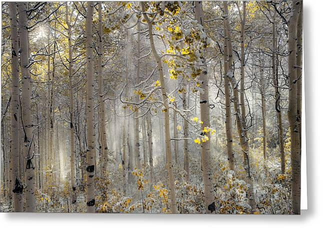 Ethereal Autumn Greeting Card by Leland D Howard