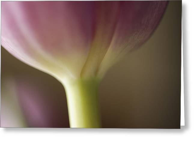 Ethereal Curvature Greeting Card by Christi Kraft