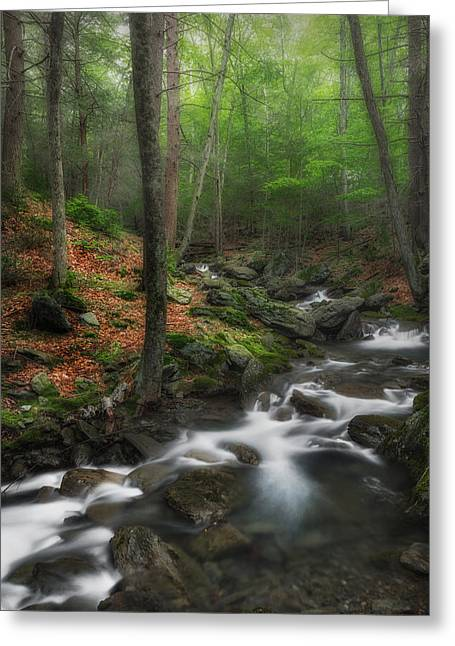 Western Ma Greeting Cards - Ethereal Forest Greeting Card by Bill  Wakeley