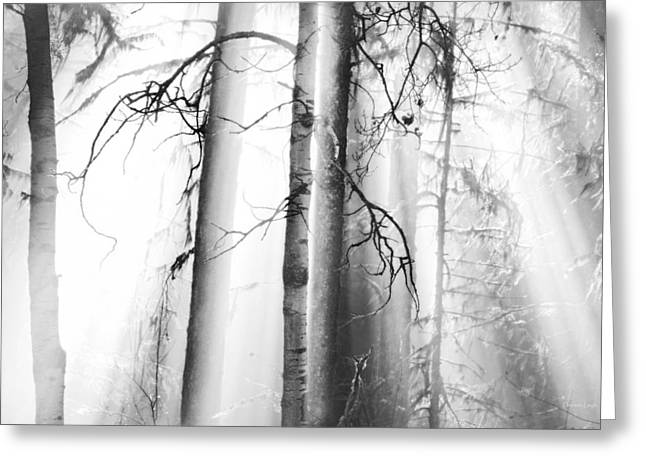 Fir Trees Greeting Cards - Ethereal Forest Greeting Card by Theresa Tahara
