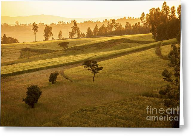 Mountain Valley Greeting Cards - Ethiopian highlands at dawn Greeting Card by John Wollwerth