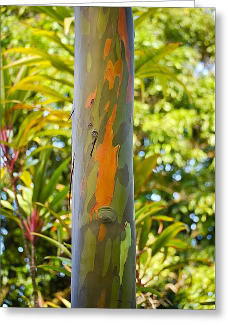 In His Light Greeting Cards - Eucalyptus in Camo Greeting Card by Christi Kraft