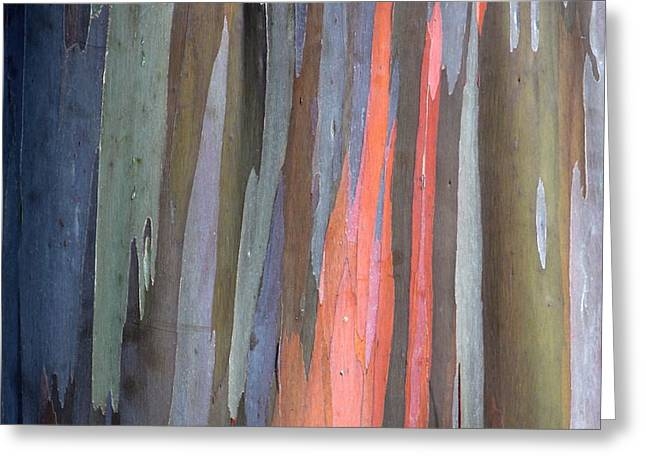 Coloured Bark Greeting Cards - Eucalyptus Tree Bark Greeting Card by Karon Melillo DeVega