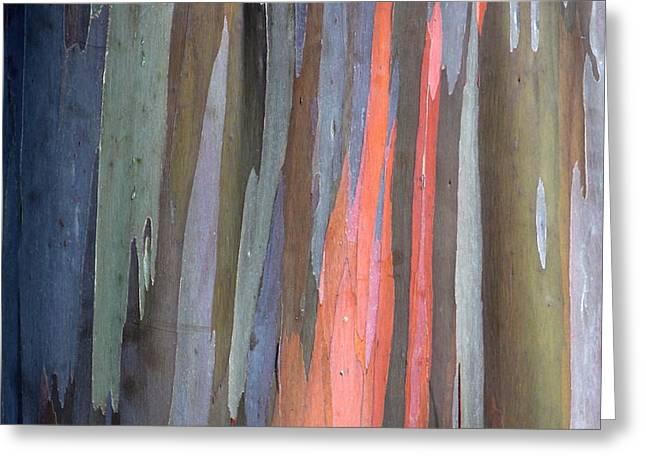 Eucalyptus Tree Bark Greeting Card by Karon Melillo DeVega