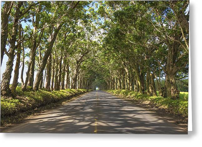 Roadway Photographs Greeting Cards - Eucalyptus Tree Tunnel - Kauai Hawaii Greeting Card by Brian Harig