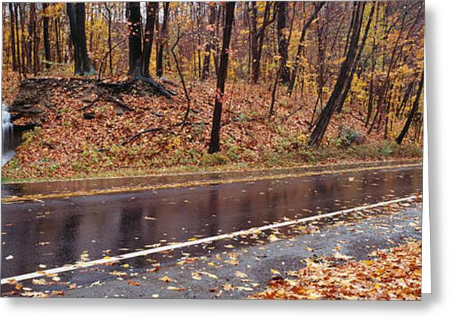 Fallen Leaf Greeting Cards - Euclid Creek, Parkway, Ohio, Usa Greeting Card by Panoramic Images
