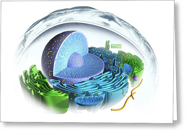 Eukaryotic Cell Greeting Card by Henning Dalhoff