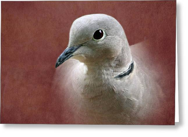 Collar Greeting Cards - Eurasian Collard Dove Greeting Card by Angie Vogel