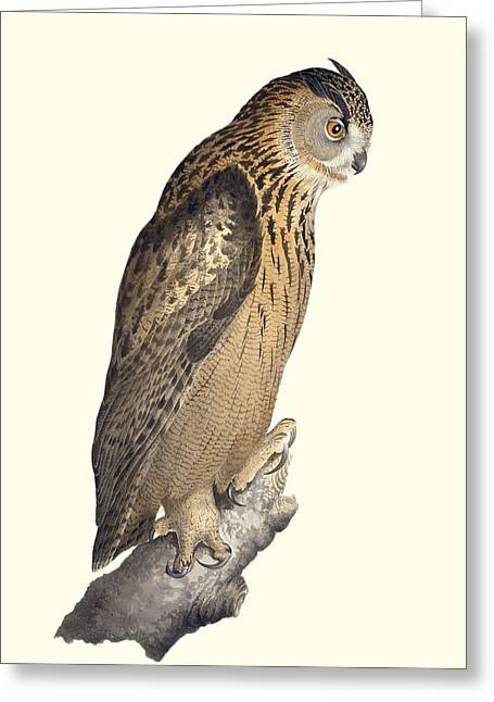 Drawing Of Eagle Greeting Cards - Eurasian eagle-owl, 19th century artwork Greeting Card by Science Photo Library