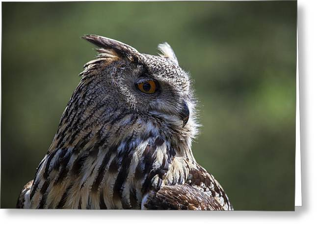 Owl Photographs Greeting Cards - Eurasian Eagle-Owl Greeting Card by Garry Gay
