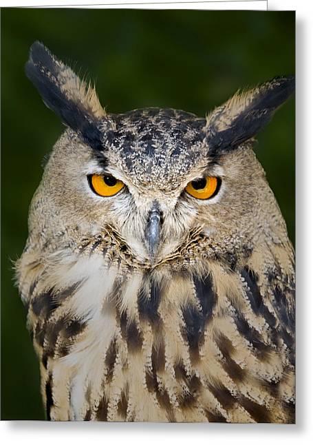 Eurasian Eagle Owl Greeting Card by Susan Candelario