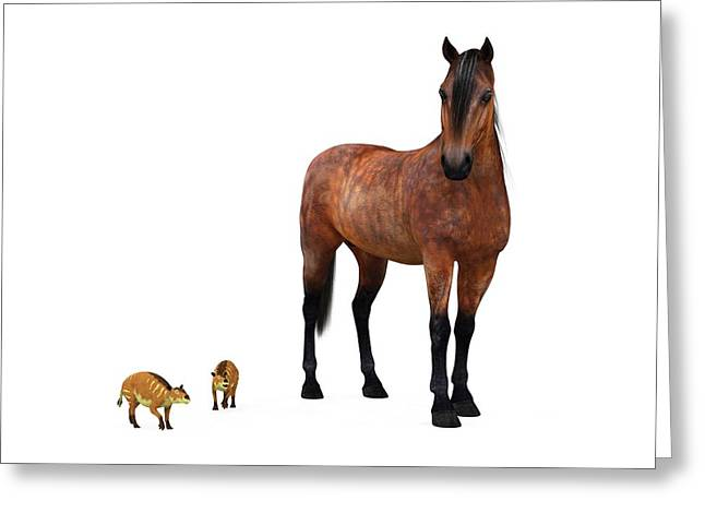 Eurohippus And Modern Horse Greeting Card by Walter Myers