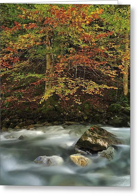 Thomas Marent Greeting Cards - European Beech Forest Switzerland Greeting Card by Thomas Marent