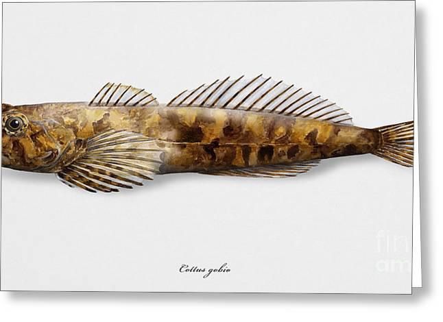 Finny Greeting Cards - European bullhead Cottus gobio - Chabot commun - Lo scazzone - El cavilat - Kivisimppu  Greeting Card by Urft Valley Art