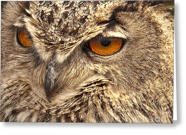 Bird Of Prey Greeting Card Greeting Cards - European Eagle Owl Greeting Card by Peter Chapman