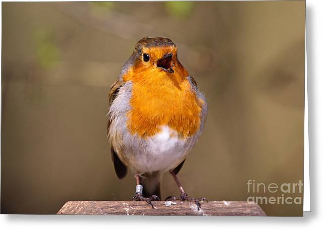 British Fauna Greeting Cards - European Robin Singing Greeting Card by Thomas Hanahoe