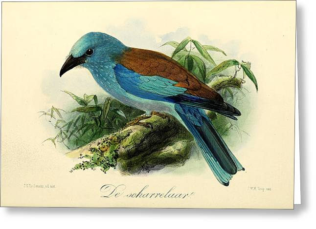Audubon Greeting Cards - European Roller Greeting Card by J G Keulemans