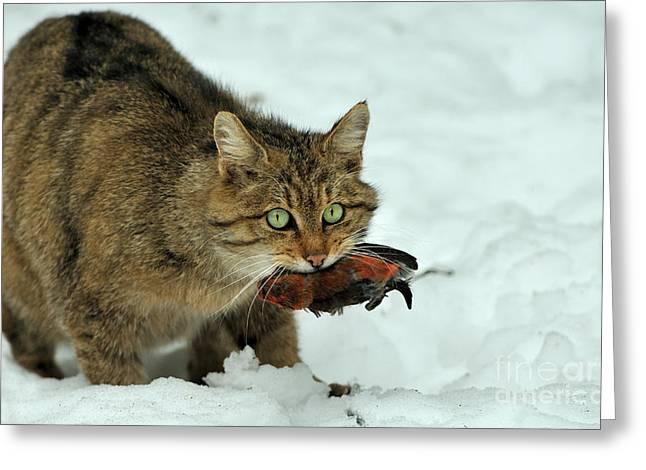 European Wildcat Greeting Card by Reiner Bernhardt
