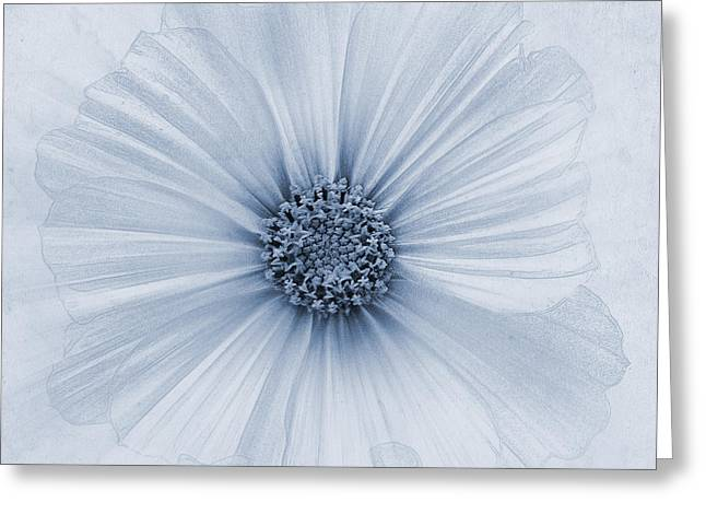 Close Focus Floral Greeting Cards - Evanescent Cyanotype Greeting Card by John Edwards