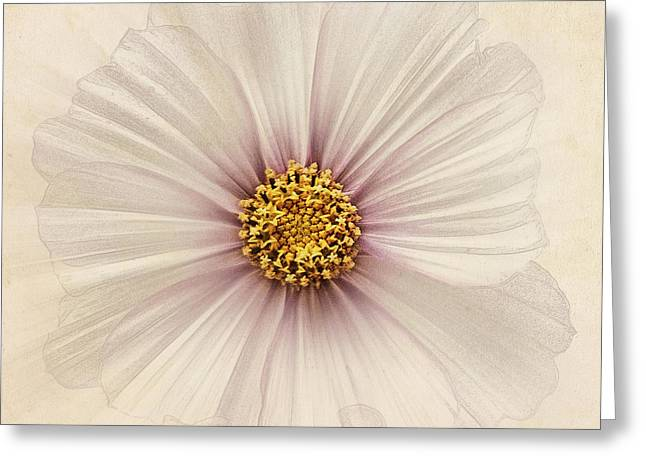 Close Focus Floral Greeting Cards - Evanescent Greeting Card by John Edwards