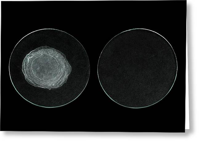 Evaporites Of Hard And Distilled Water Greeting Card by Science Photo Library