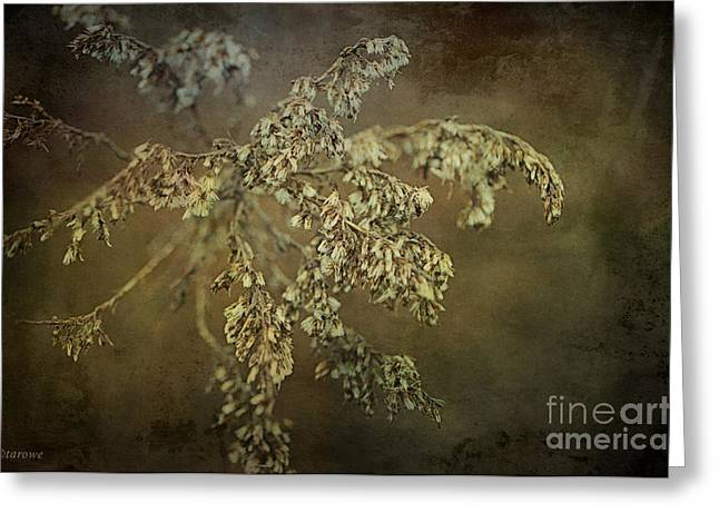 Seedy Greeting Cards - Even Weeds are Beautiful Greeting Card by Terry Rowe