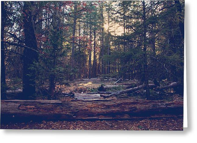 Northern California Parks Greeting Cards - Even When Its Cold Outside Greeting Card by Laurie Search