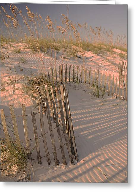 Sand Fences Photographs Greeting Cards - Evening at the Beach Greeting Card by Maria Suhr