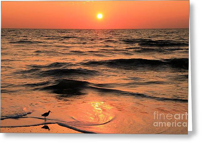 St Joseph Peninsula State Park Greeting Cards - Evening Beach Stroll Greeting Card by Adam Jewell