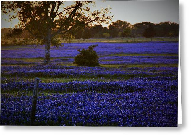 Pastureland Greeting Cards - Evening Blues Greeting Card by John  Glass